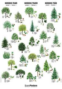 Plansch Nordens träd