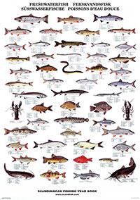 Plansch Fiskar sötvatten