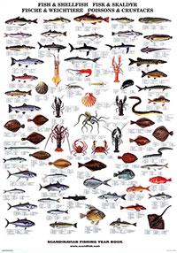 Plansch Fiskar och skaldjur