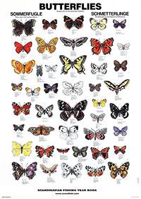 Plansch Fjärilar