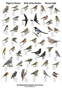 Plansch Trädgårdens fåglar