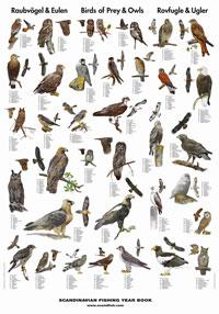 Plansch Rovfåglar och ugglor