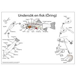 Dissekeringsduk fisk