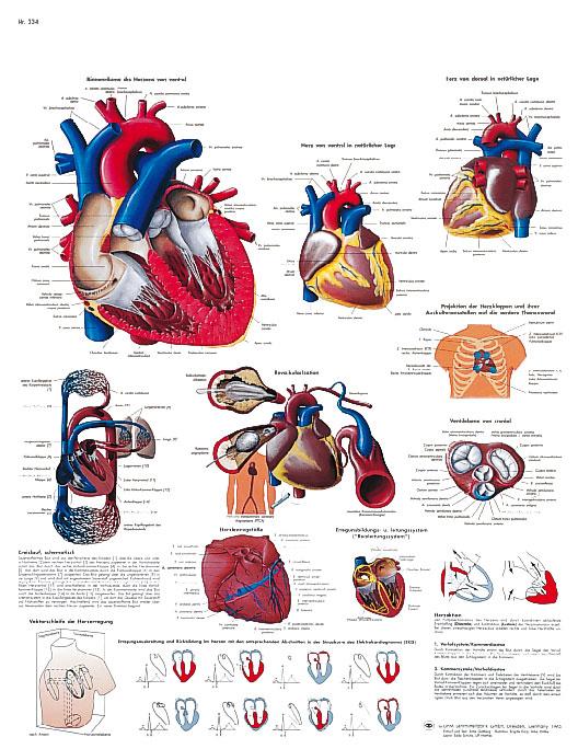 Plansch Hjärtat laminerad