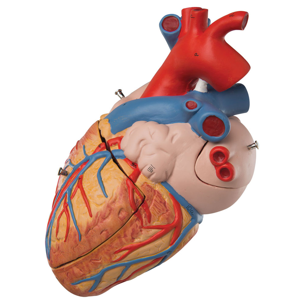Hjärta maxi
