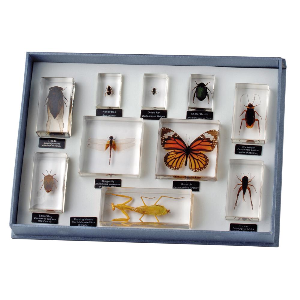 Insekter, 10 ordningar
