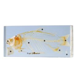 Skelett fisk