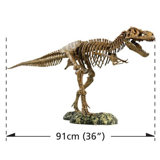 Skelett Tyrannosaurus Rex - nästan 1 m långt!