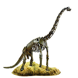 Skelett Brachiosaurus FYND