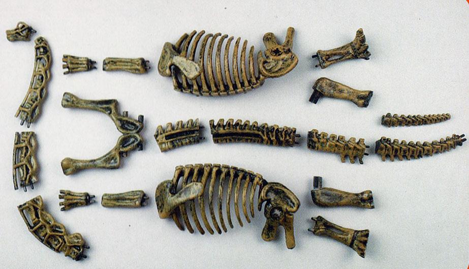 Skelett Brachiosaurus