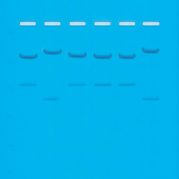 DNA fingerprinting I - Vem är den skyldige? - Edvotek