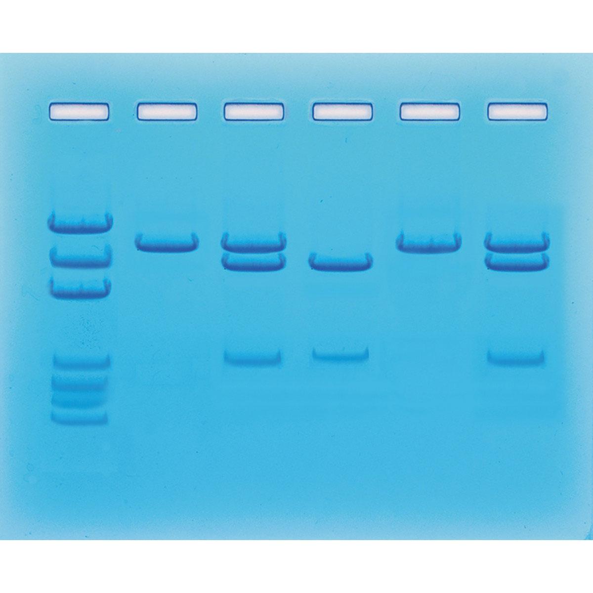 Covid-19 simulerat test med PCR - Edvotek
