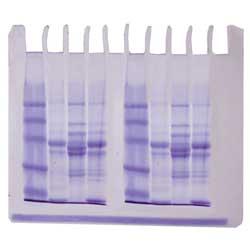 Fiskprotein - en jämförelse - Edvotek