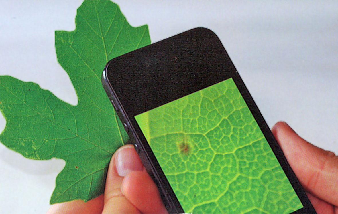 Makrolins 15x för mobiltelefon