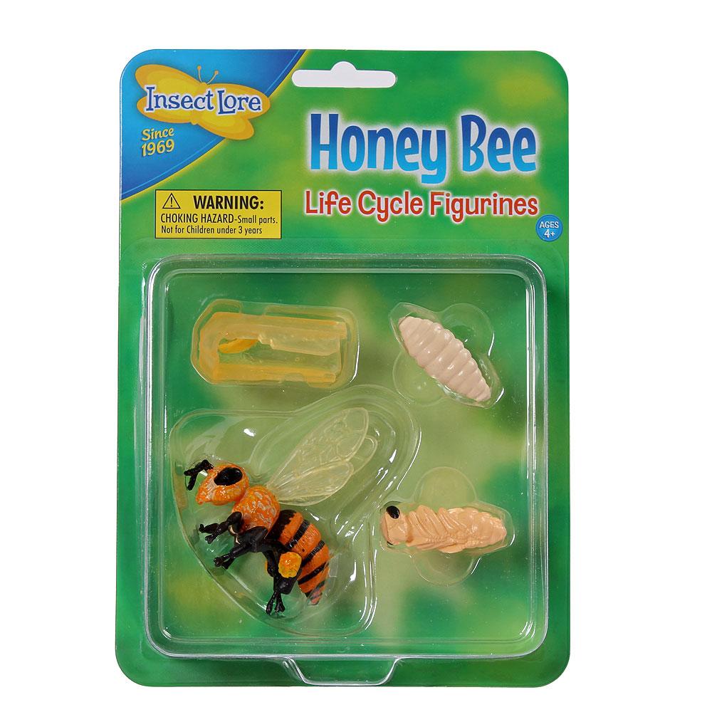 Biets livscykel, modeller